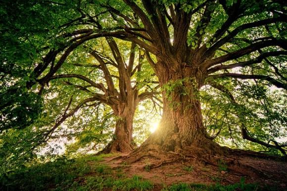 tree-3822149_640_e
