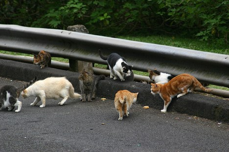 feral-cats-jj