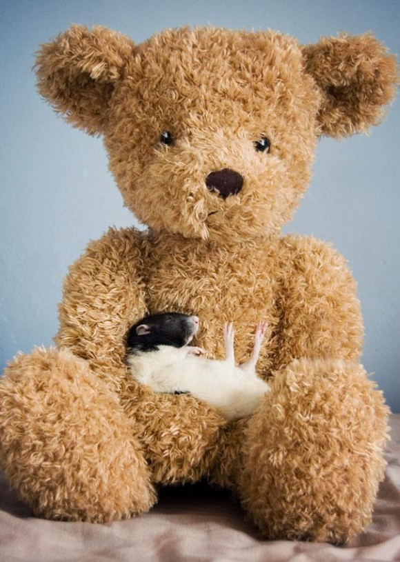 rats-with-teddy-bears-jessica-florence-11_e