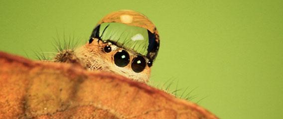 ハエトリグモの画像 p1_37