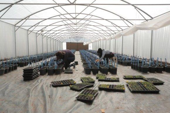 未来に備えて植物の種を保管していたスヴァールバル世界種子貯蔵庫がついに使用される。シリア内戦の為