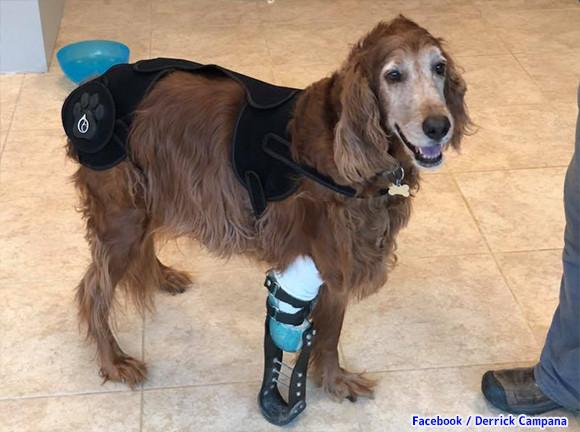 プロの義肢職人が、脚を失った動物たちに最適な義肢をカスタマイズ。再び走り回れるよう願いを込めて(アメリカ)