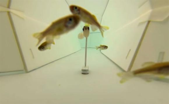 ミツバチと魚の会話を実現!?画期的な通訳ロボットが開発される(ハチ出演中)