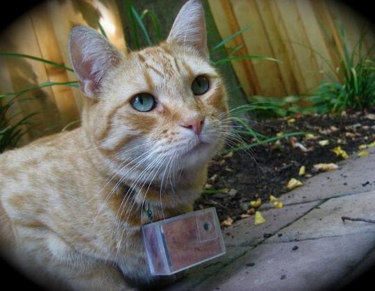 seeing_life_through_cats_eyes_58