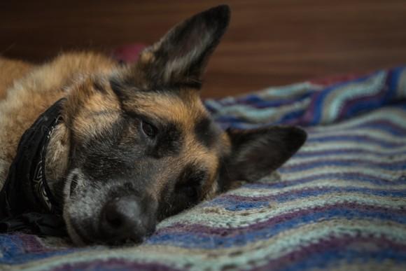 かわいがっていた配達先の飼い犬の死を知った郵便配達員男性、犬が残した最後の願いを叶える(アメリカ)
