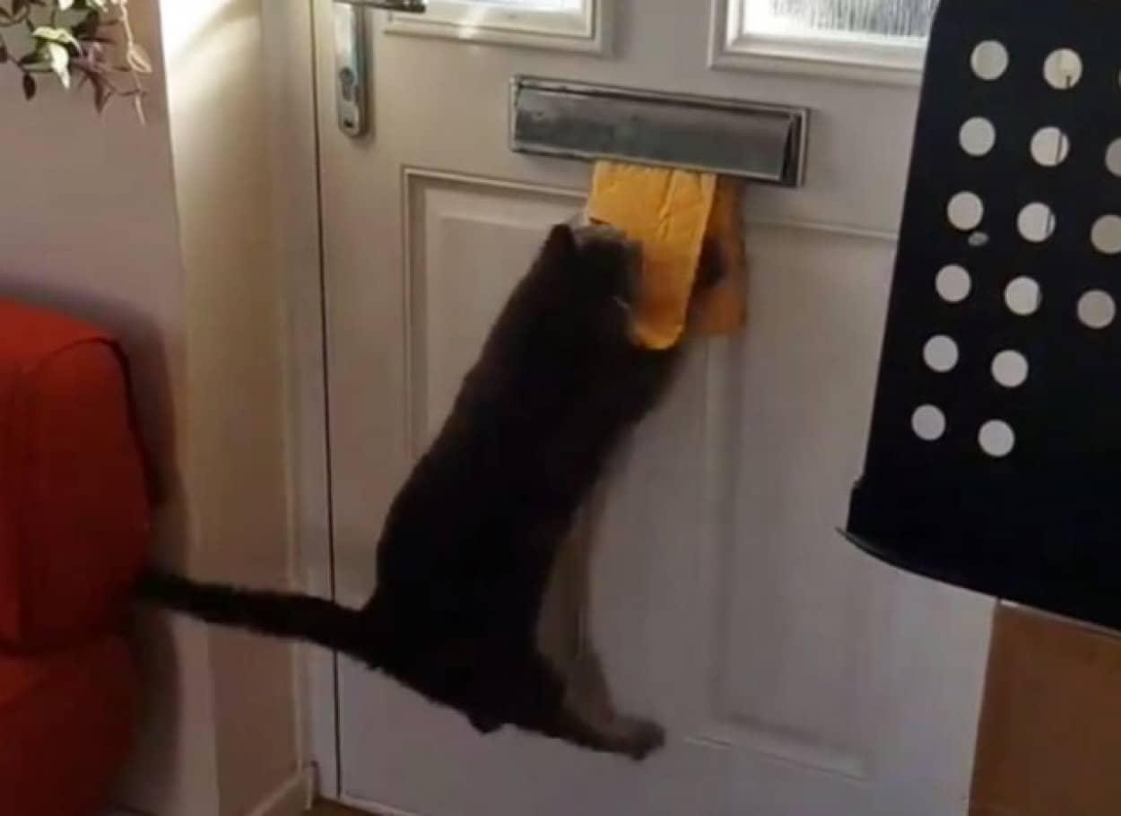 猫と郵便物の面白動画