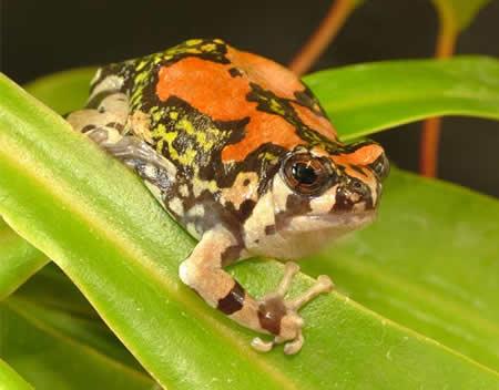 a96745_rainbowfrog