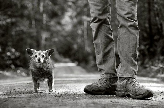 old_dogs_19