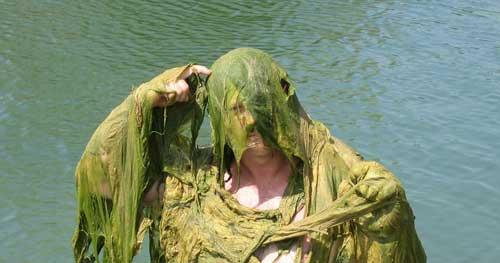 Algae-puzzled
