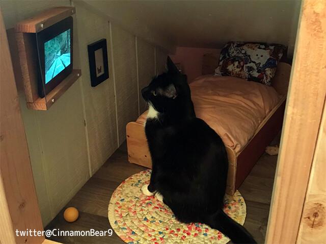 猫様専用物件。鳥の映像が流れるテレビ付きのゴージャスなワンルームを作り上げた飼い主