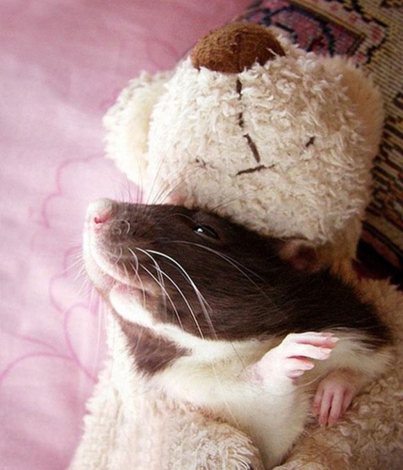 rats-with-teddy-bears-jessica-florence-12_e
