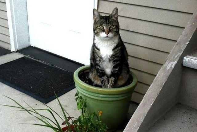 とりあえず水をやらないでください!植木鉢に収まる猫植物たち