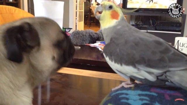 鳥ってこんなに楽しいヤツらだったっけ?見てて飽きない鳥たちの所業総集編