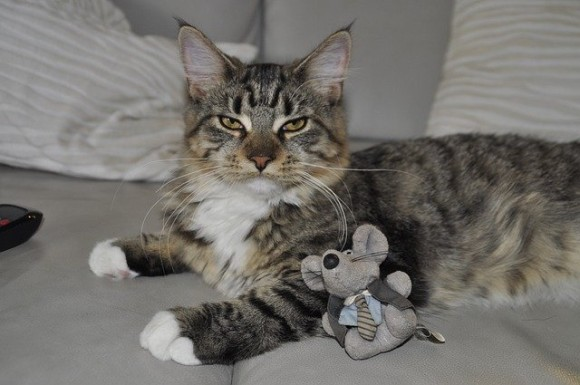 cat-199969_640_e