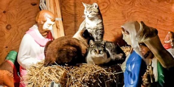 やはり猫は神だった?キリスト降誕ミニチュアセットを作ると必ず現れてキリストの場所を乗っ取る猫たち(アメリカ)