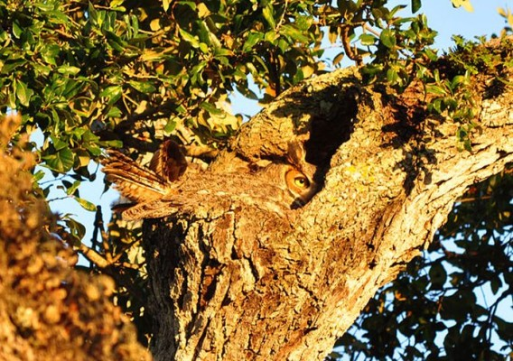 camouflaged_owls_20_e
