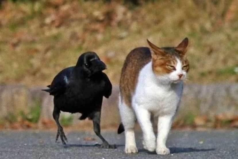 crowsnanimals4_e