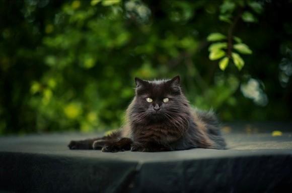 人間の為に奮闘し、感動を与えてくれた猫たちを称える「ナショナル・キャット・アワード」を受賞した12匹の猫