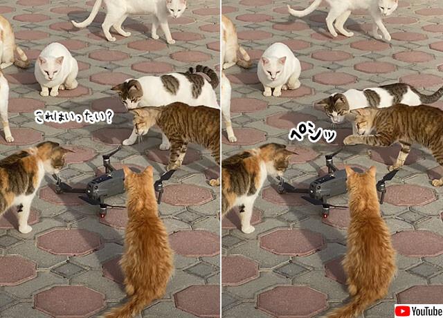 ドローンが猫集団に囲まれた!猫のこうげき