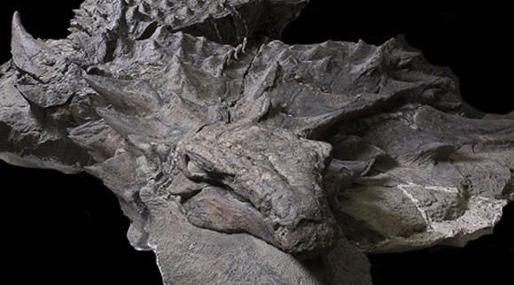 すごヤバかっこいい!保存状態が良い1億1,000年前の恐竜「ノドサウルス」の化石