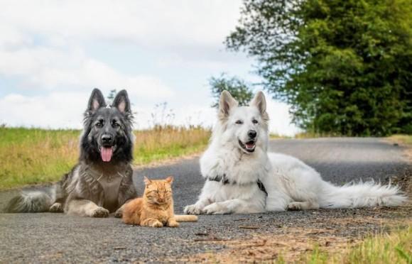 消防士に保護された子猫、飼い犬に囲まれ育ち犬化が加速(ベルギー)