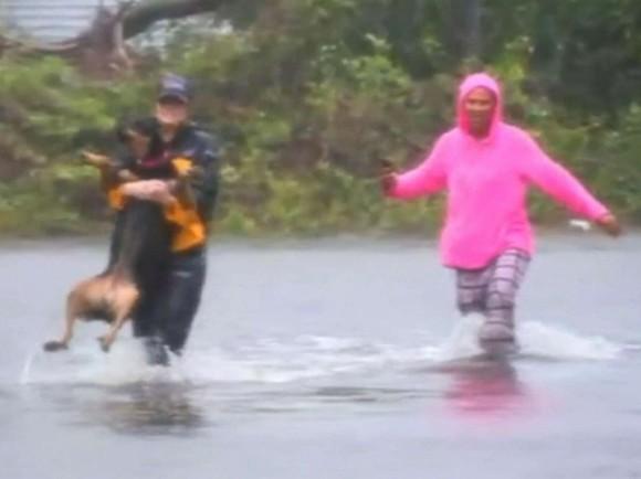 ハリケーン「フローレンス」の現場中継の最中、犬の救助活動を手伝ったレポーター(アメリカ)