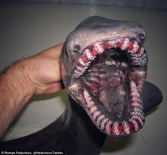 クリーチャー感が凄い!ロシアの漁師が海で引き揚げた奇妙な生き物たち
