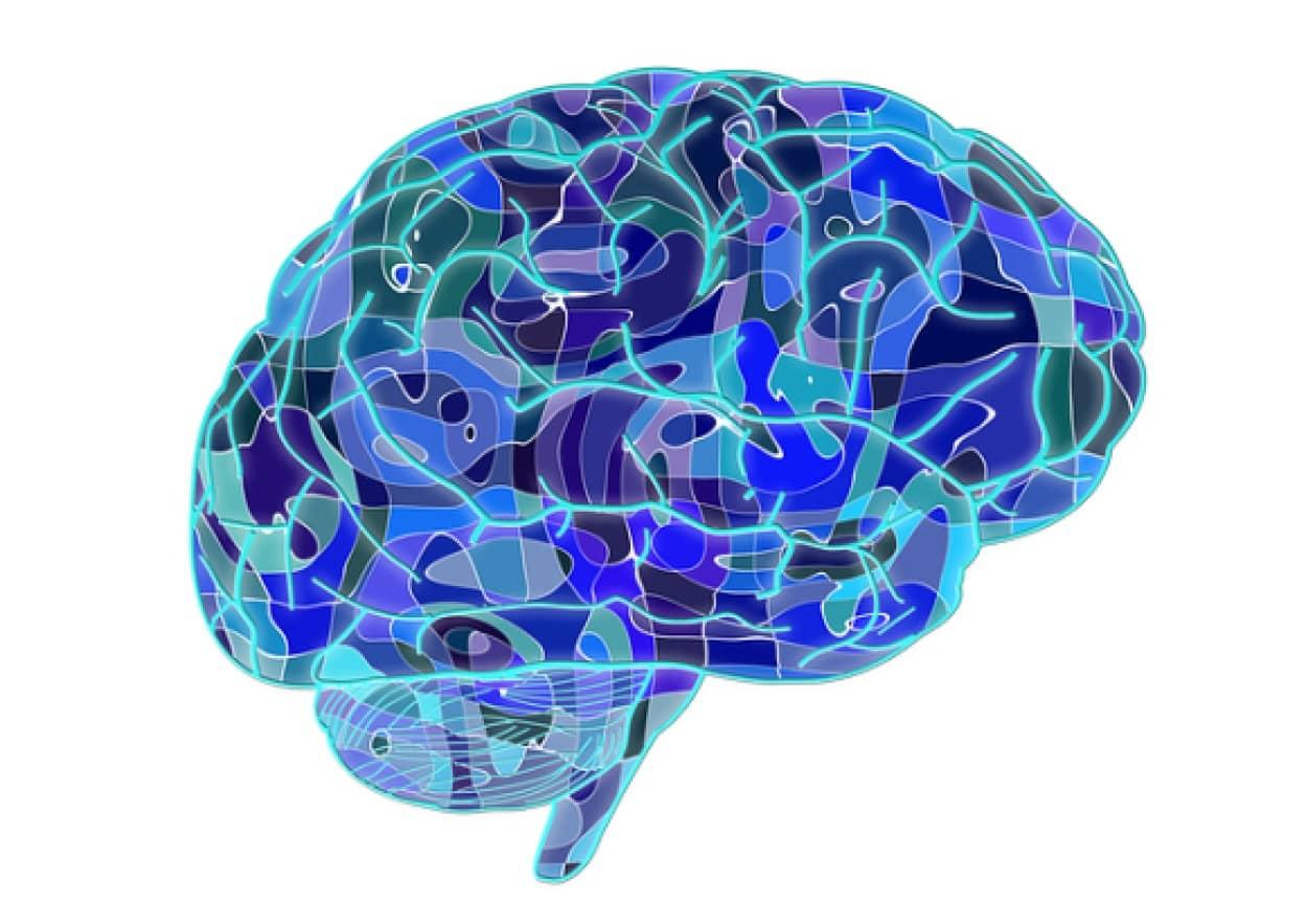 brain-951874_640_e