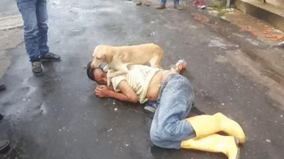酔っぱらって道路上で眠り込んでしまった飼い主さえも必死に守ろうとする犬(コロンビア)