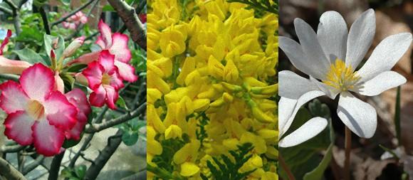 きれいな花には殺傷力。人を死に至らしめるほどの猛毒を持つ10の花