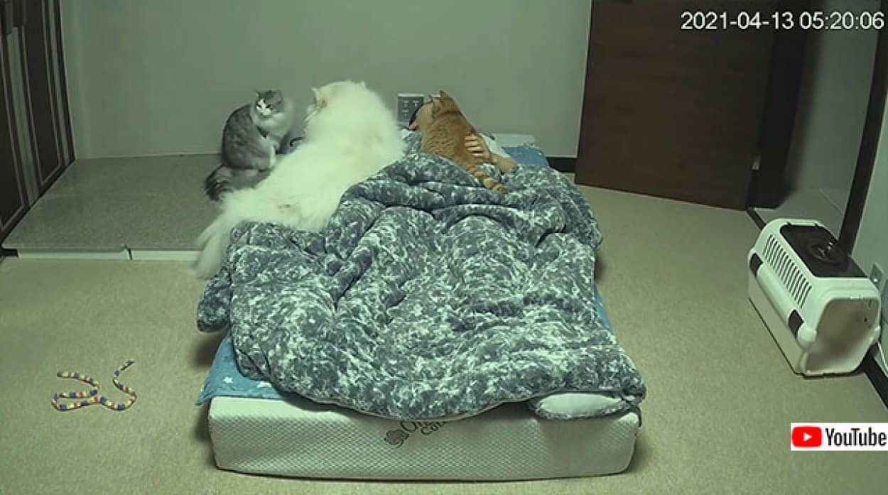 犬と猫、両方飼っている人の就寝中の様子を早回しでno title