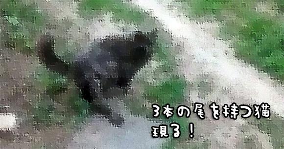 これが猫又なのか?3本の尻尾を持つ猫がロシアで激写される