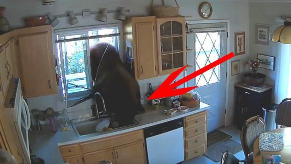 ヨネスケじゃなくクマだった。台所の窓から突撃!隣の晩ごはんしてきたクマ、食料を奪い去って去っていく(アメリカ)