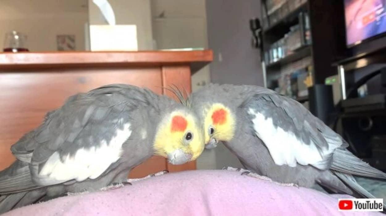 birdie7_640