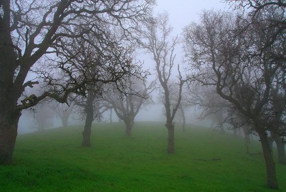 fog_07