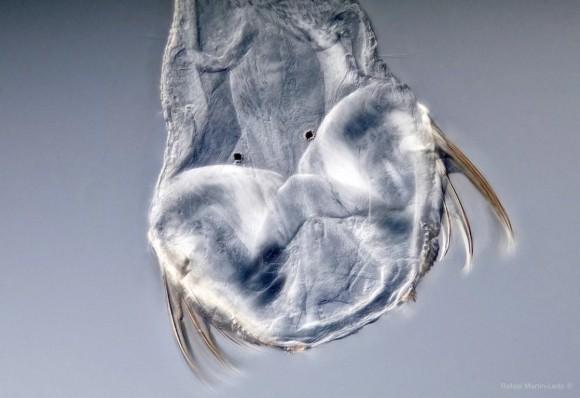 頭と体がちぐはぐな謎のカンブリア紀の古代生物。その分類学上の地位が判明(英研究)
