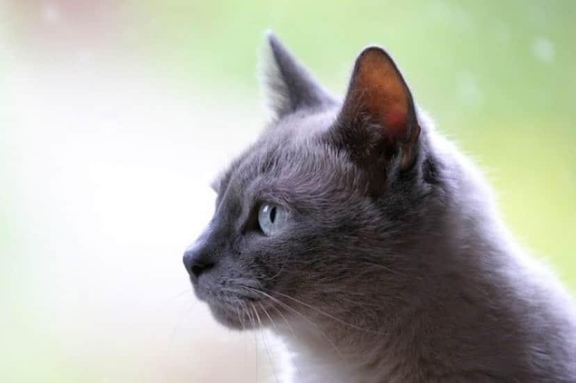 cat-3261420_640_e