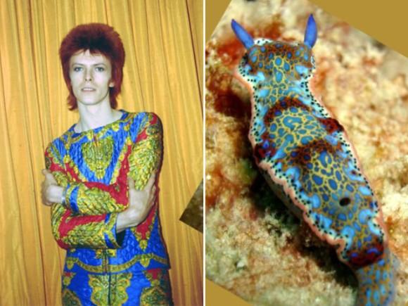 デヴィッド・ボウイとウミウシの類似性を比較してみた