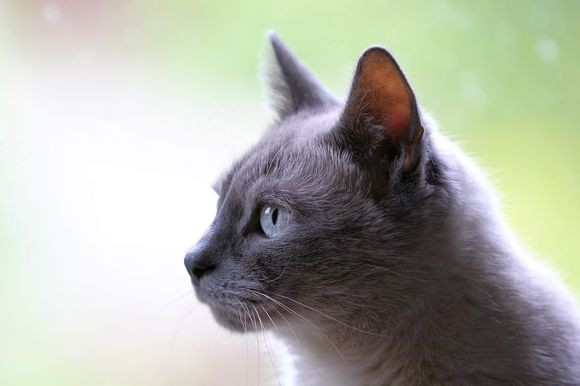 cat-listen_pixabay