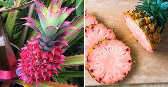 皮も果肉もピンク色!乙女めいたパイナップルがこの夏よりアメリカで販売開始