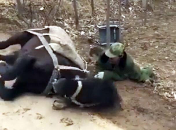 介助馬の訓練