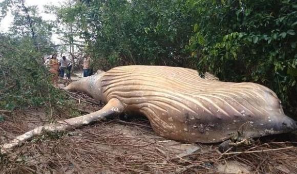 いったいなぜ?アマゾンのジャングルの中からクジラが発見されるというミステリー