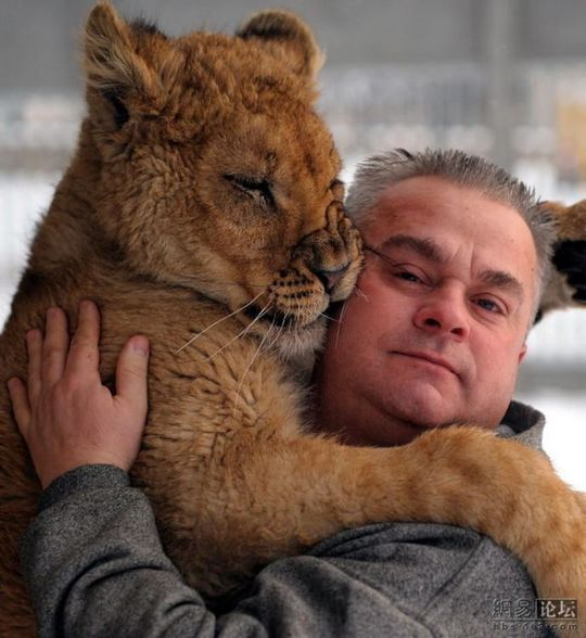 lion_and_man_06