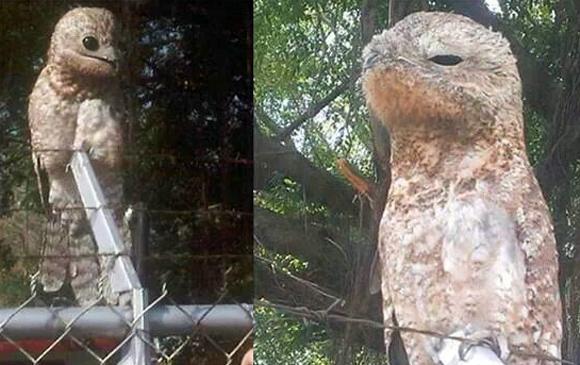 【画像】ベネズエラで怪鳥が捕まる