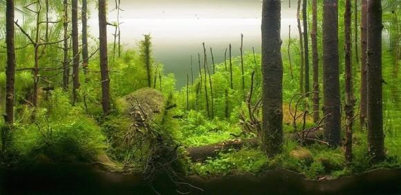 森のようなアクアリウムアート