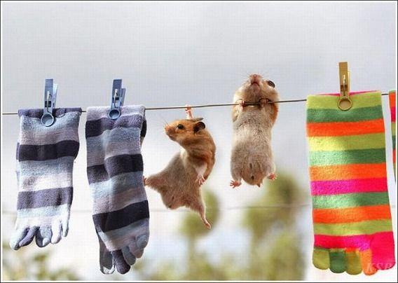 hamsters_11