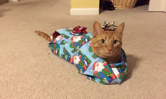 クリスマスとか超うぜえ!人間に祭り上げられたことによってクリスマスが嫌いなっている感のあるペットたちの画像まとめ