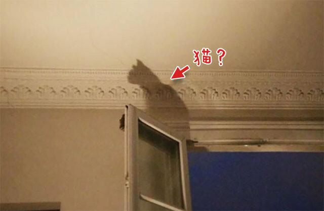 いるはずのない猫が見える。キャレイドリア現象