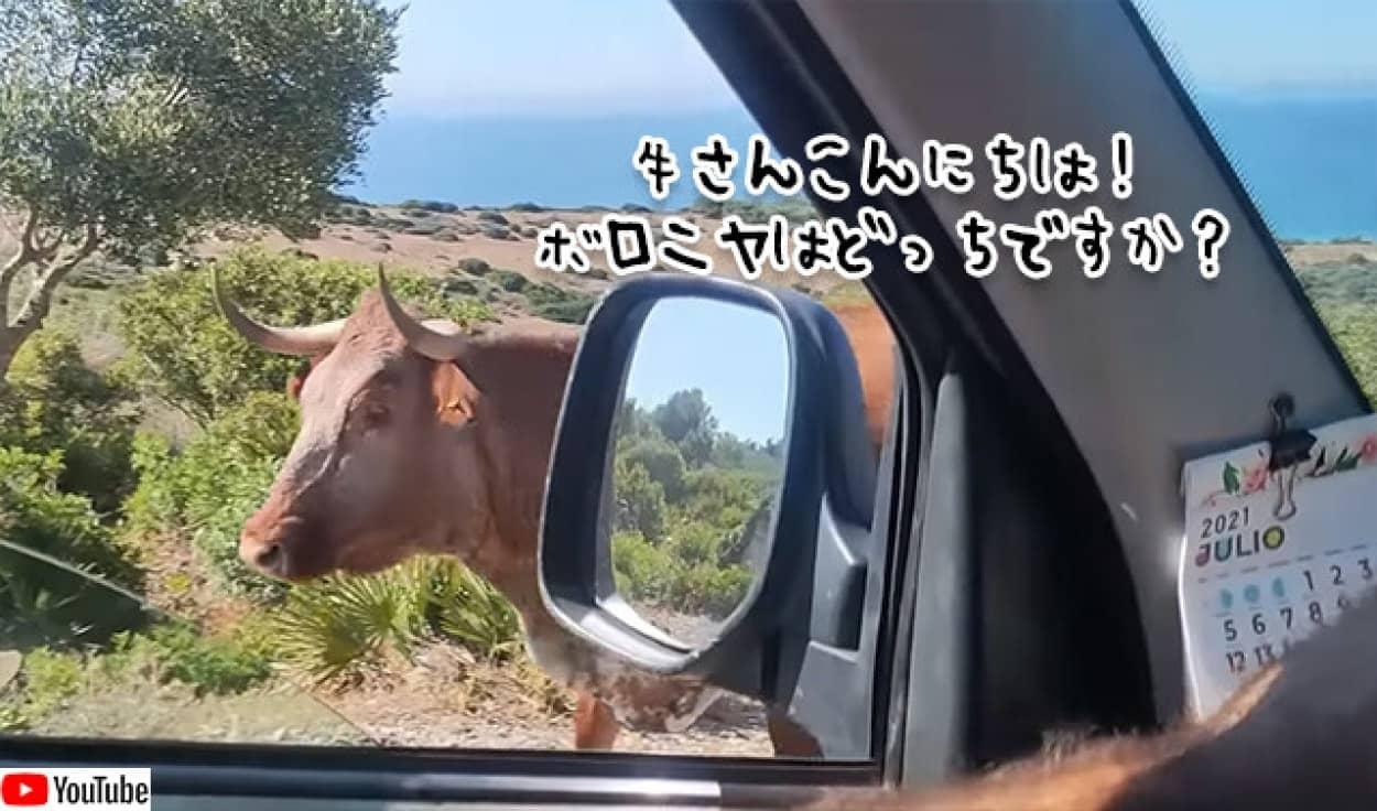 牛が道を教えてくれるという事案