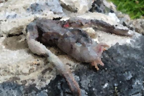 見たこともない足の形をしたヌルヌル謎生物が発見される(ノルウェー)※閲覧注意